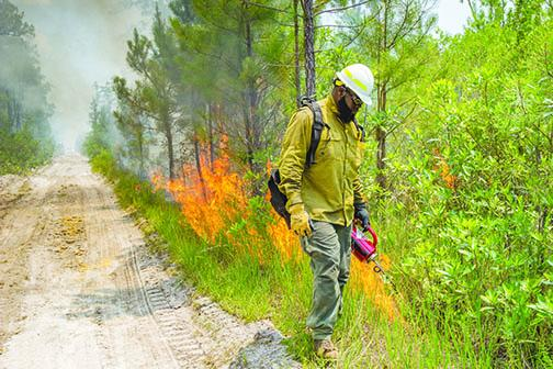 Firefighters conduct a controlled burn to control a larger forest fire in July.