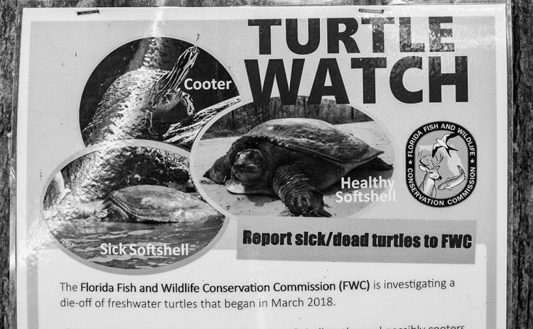 The state Fish and Wildlife Conservation Commission has posted signs along local waterways warning people of ill and dying turtles.