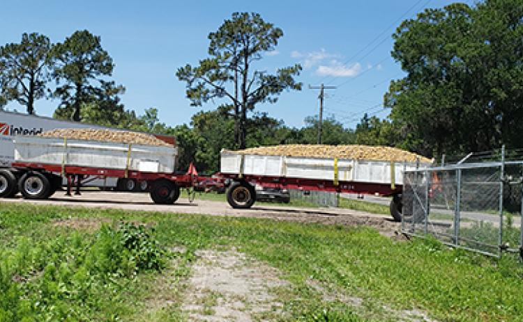 A truck filled with potatoes arrives at L&M Farms in East Palatka. Agriculture is the state's second-leading industry.