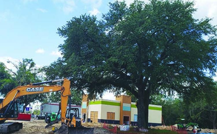 Construction continues Thursday on the new Captain D's on State Road 19, with the restaurant in the background behind a live oak tree that will remain on the property.